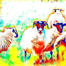 moutons creuse campagne