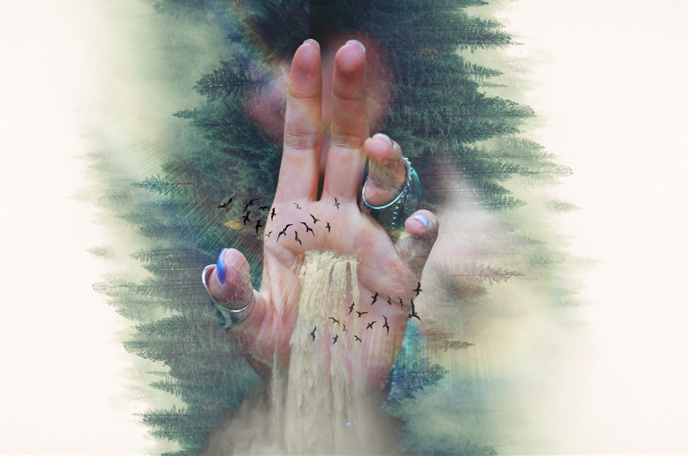 #FreeToEdit  #edited #doubleexposure  #hand #forest #waterfall #birds  Op @freetoedit