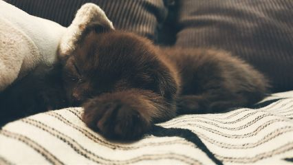 счастье спятусталые котэ cute kitten