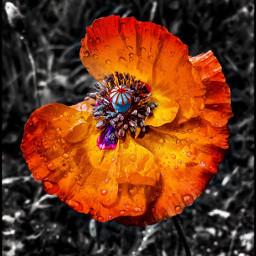 interesting nature naturephotography summer flower freetoedit