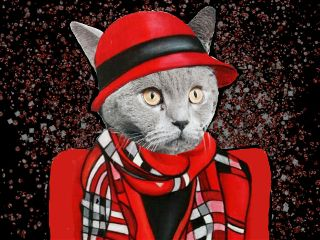 freetoedit cat portrait glitter cloth
