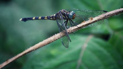 photography nature animals green dragonfly