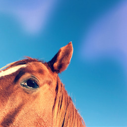 horse colorful sky blue