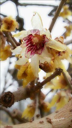 flower nature naturephotography blossom winter
