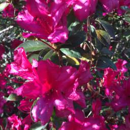 freetoedit nature flower nofilter