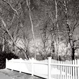 blackandwhite trees fences