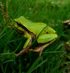 freetoedit colorful animals frog