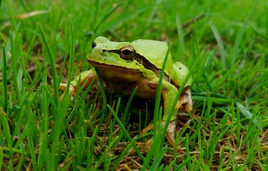 freetoedit colorful spring animals frog