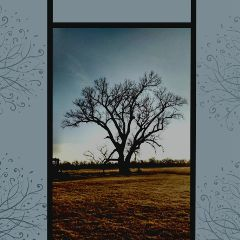 kansas tree prairie sky