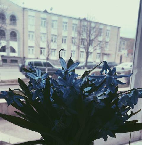 editbyme flowers colorful color blue freetoedit