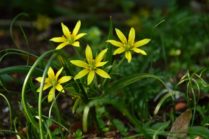 nature yellow flowers spring love