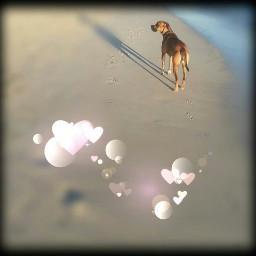 freetoedit walkonthebeach mygirl dogsofpicsart lovemygirl