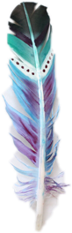 feather freetoedit