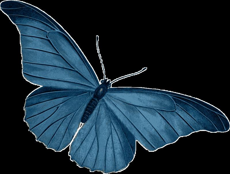 #butterfly #ftestickers #FreeToEdit