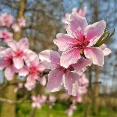 flower blossom nature spring shanghai