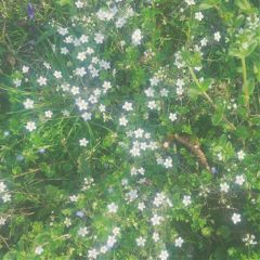 freetoedit spring springtime nature