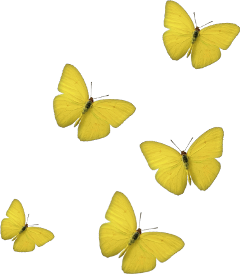 butterfly yellow picsartstickers
