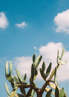 freetoedit leaves plant minimalism cactus