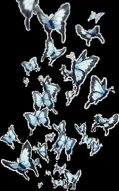 anime butterflies blue sticker freetoedit