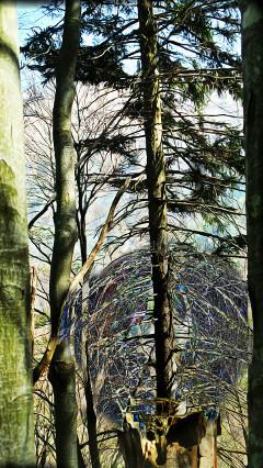 nature trees freetoedit