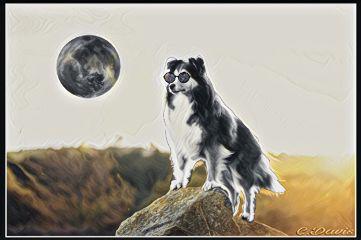 freetoedit remix blackandwhite animals moon
